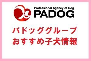 PADOGおすすめ子犬情報