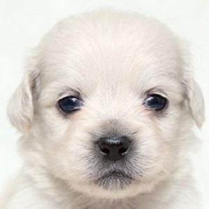 ミックス犬0107