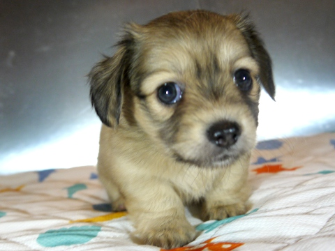 ブリーダーの育てる犬を子犬販売するドッグリアン東京