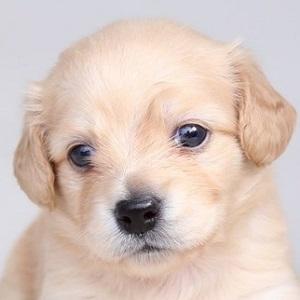 ミックス犬0826