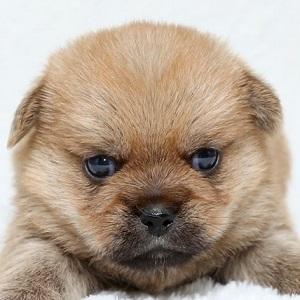 ミックス犬1014