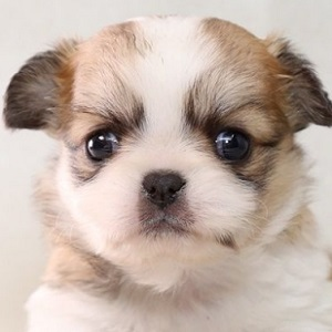 ミックス犬1224