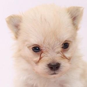 ミックス犬マルポメ0622
