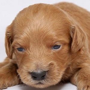ミックス犬0119