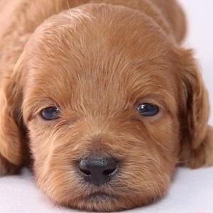 ミックス犬0405