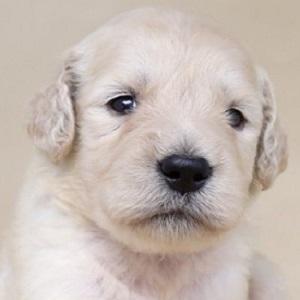 ミックス犬ドゥードル0707