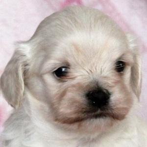 ミックス犬マルックス0306