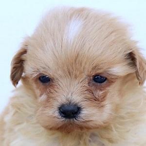 ミックス犬1115